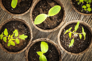 Fun Tips for Starting a Family Garden Planting Seeds vs Seedlings Copperleaf Community