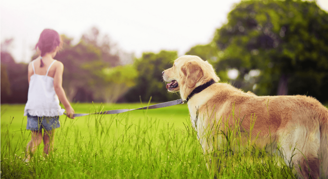 pets can make you healthier